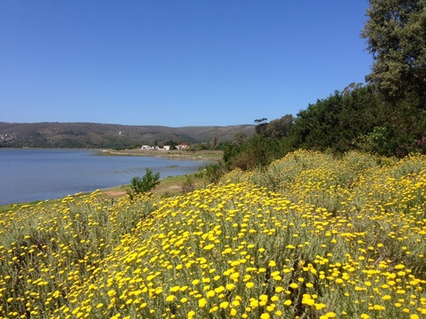 knysna accommodation, blue fern of knysna, B&B knysna, parks Knysna